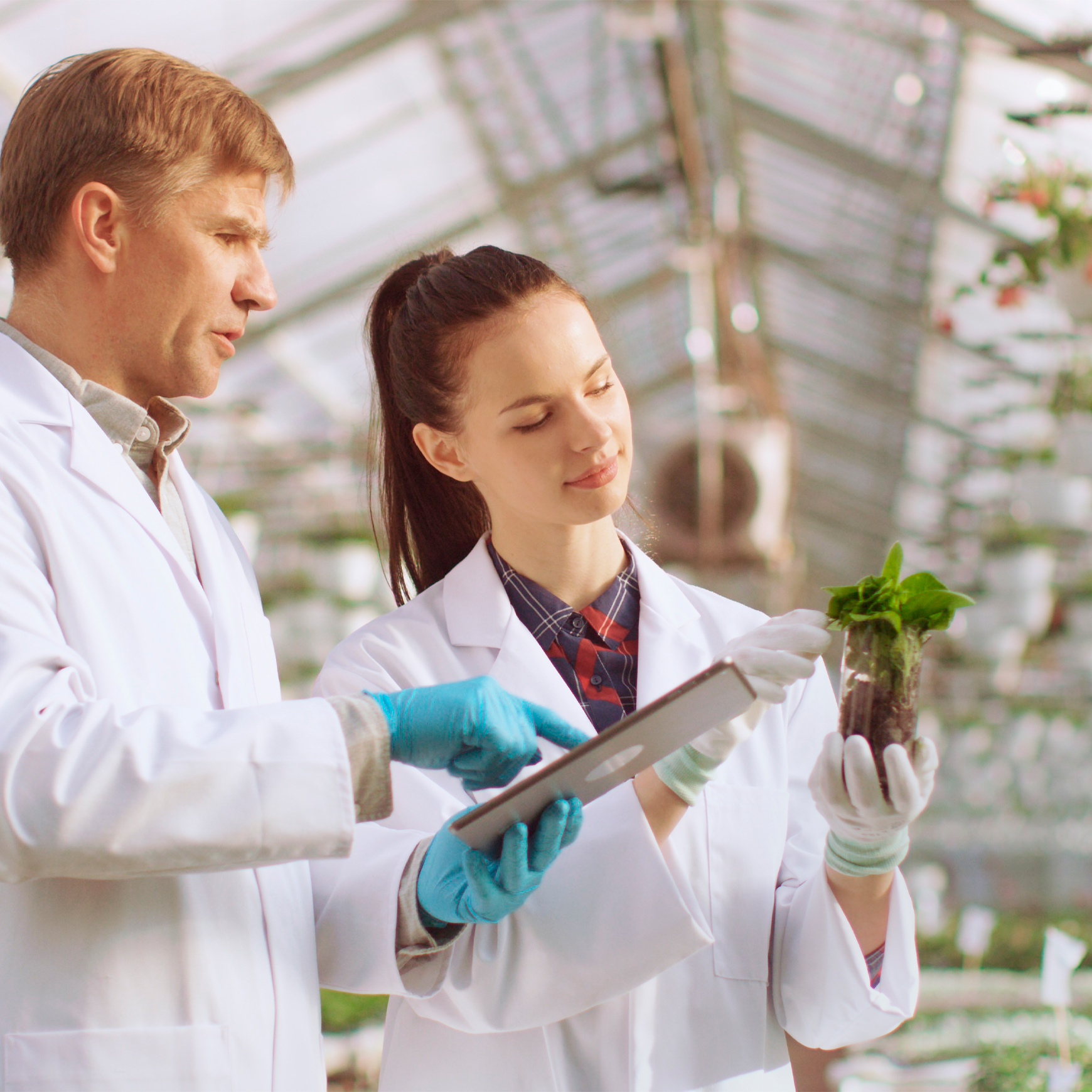 scientists using tablet in greenhouse and inspecting plants