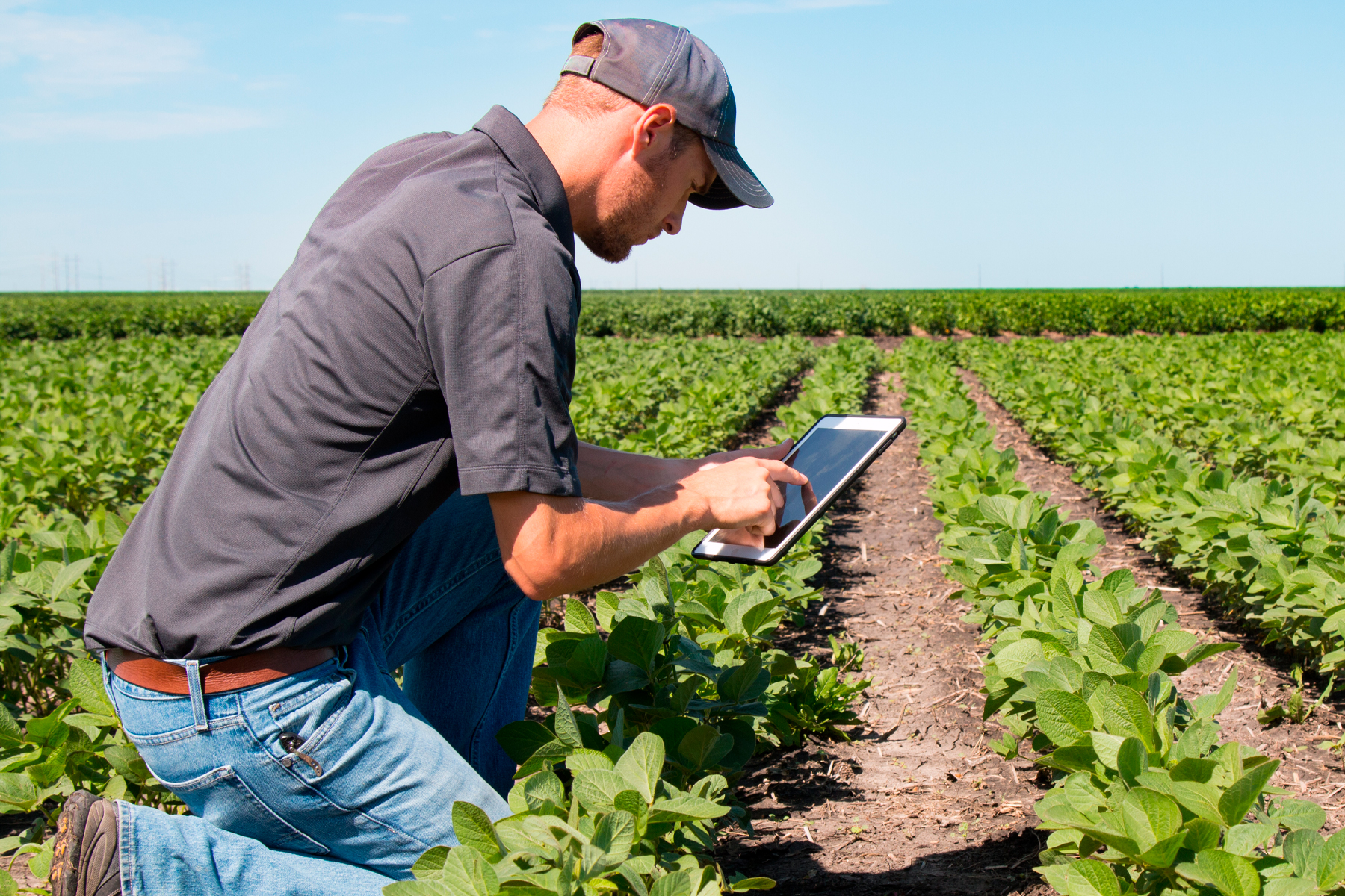 a field worker uses a tablet and monitors a field of crops