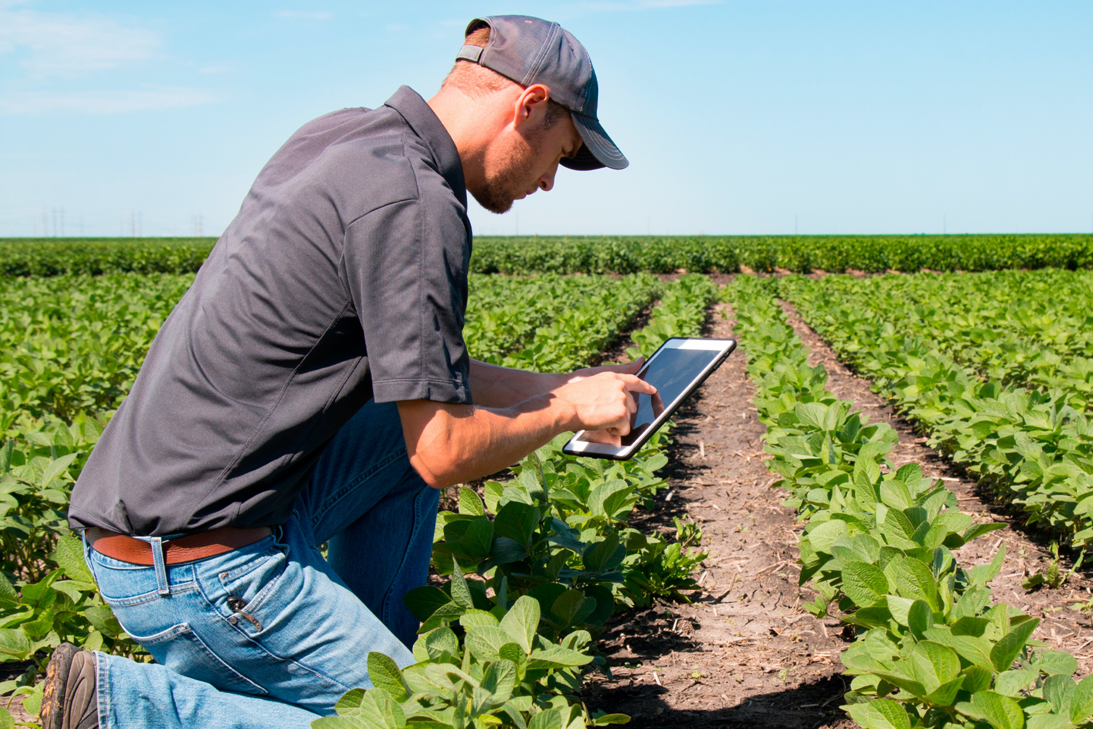 man using tablet in a field full of crops